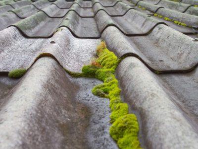 Le démoussage de toiture