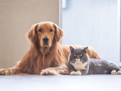 Alarme et animaux domestiques : comment ça se passe ?