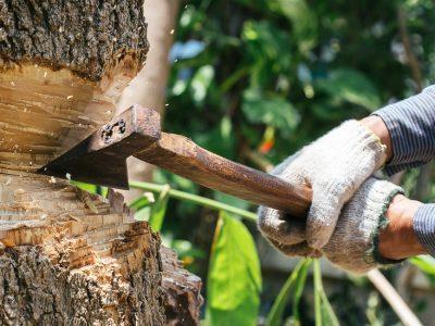 L'abattage d'arbres