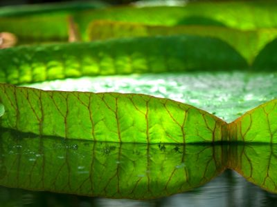 Quelle végétation pour une piscine naturelle ?