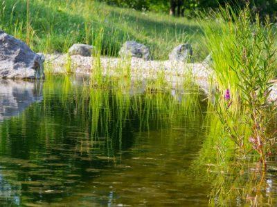 Principe de la piscine écologique