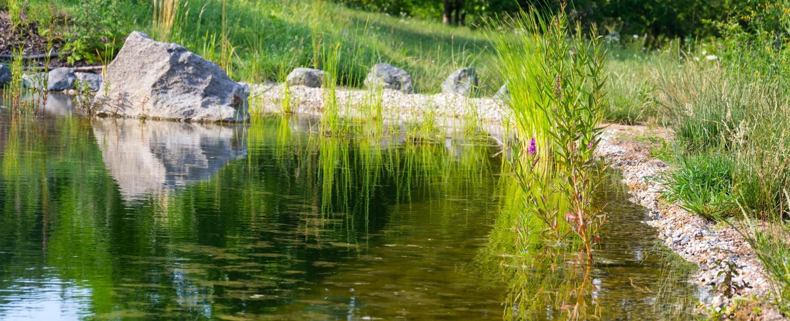 Comment installer une piscine ecologique ou naturelle prix co t devis - Piscine ecologique prix ...